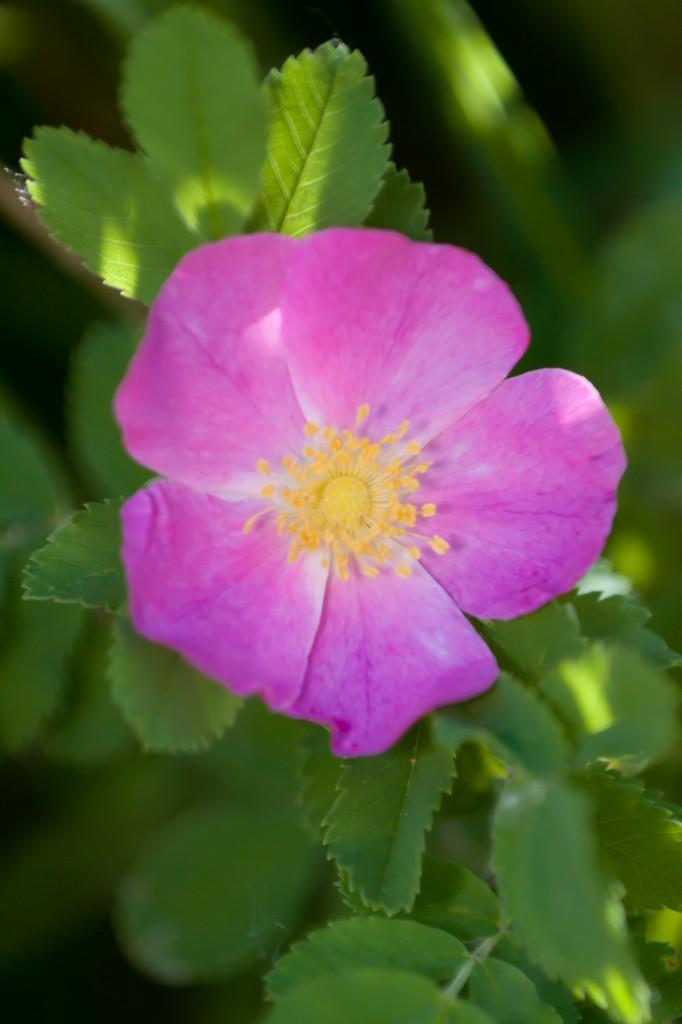 Vibrant Flower - Boulder, CO